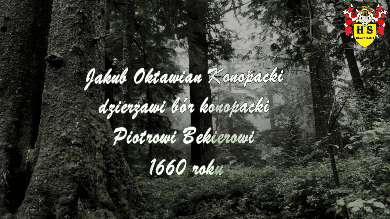Konopacki dzierżawi bór konopacki Bekierowi 1660 roku